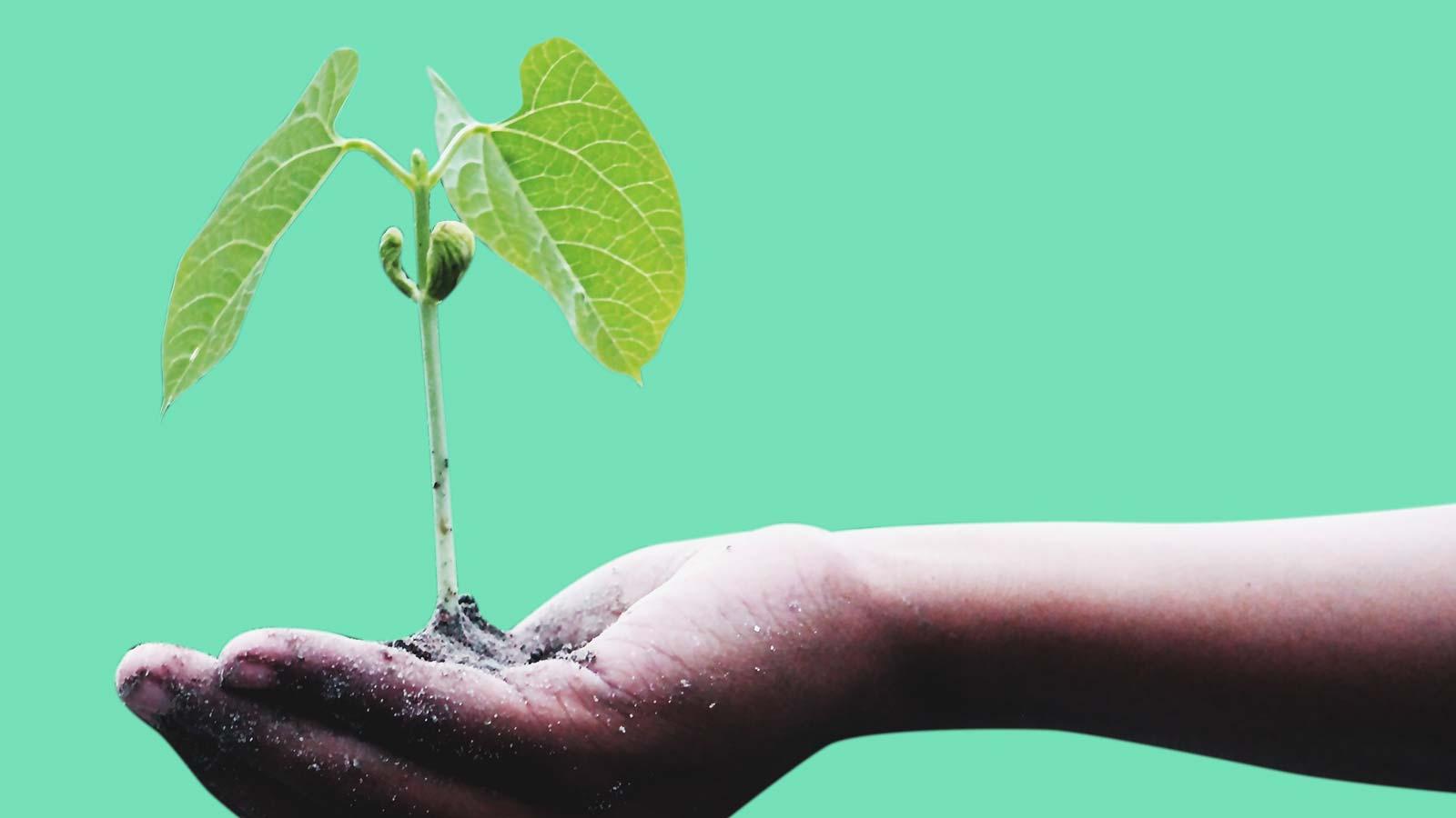 Seed plan